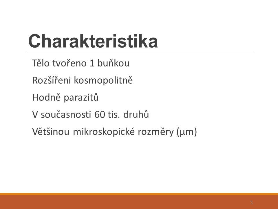Organely 1.podpory a ochrany – pelikula, schránky, cysty 2.