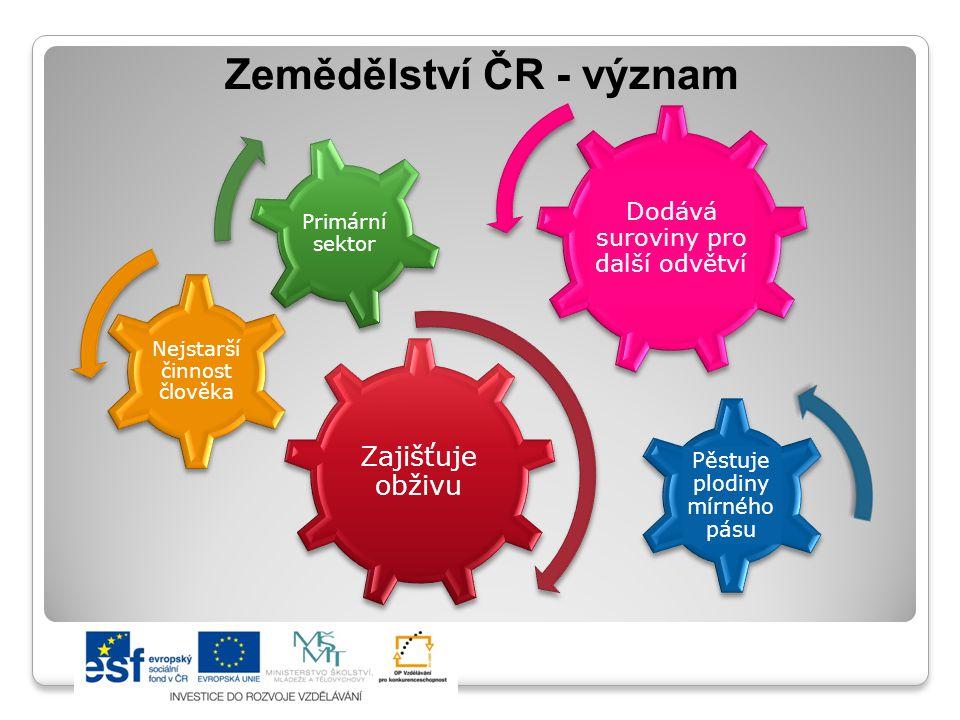 Zemědělství ČR - význam Zajišťuje obživu Nejstarší činnost člověka Primární sektor Pěstuje plodiny mírného pásu Dodává suroviny pro další odvětví