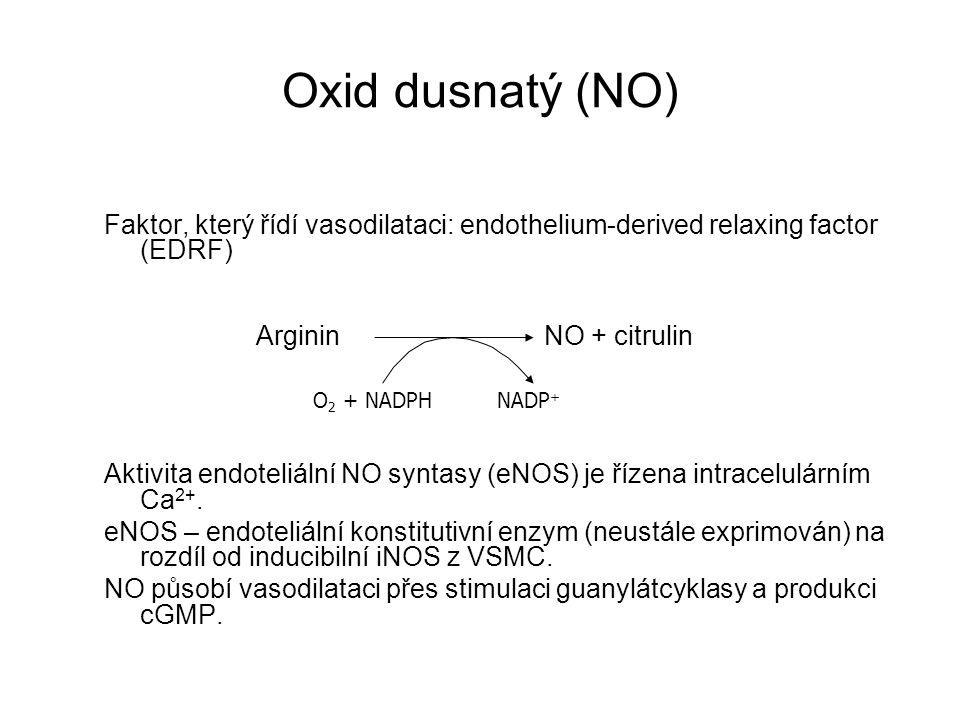 Faktor, který řídí vasodilataci: endothelium-derived relaxing factor (EDRF) Aktivita endoteliální NO syntasy (eNOS) je řízena intracelulárním Ca 2+. e