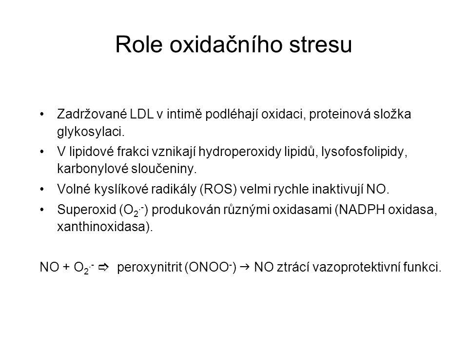 Role oxidačního stresu Zadržované LDL v intimě podléhají oxidaci, proteinová složka glykosylaci. V lipidové frakci vznikají hydroperoxidy lipidů, lyso