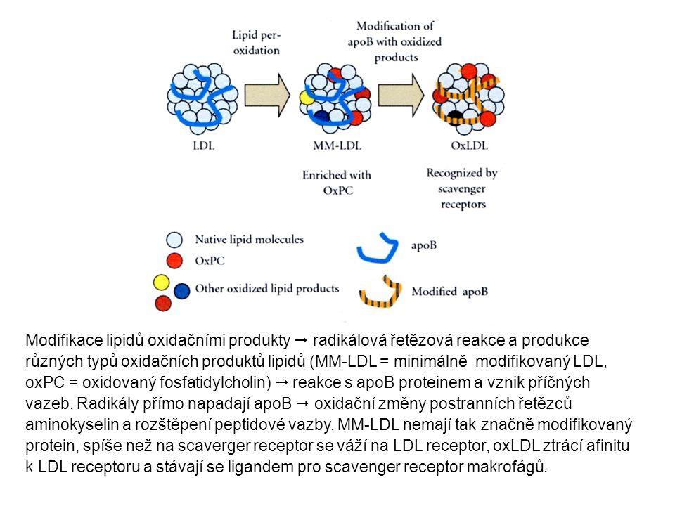 Modifikace lipidů oxidačními produkty  radikálová řetězová reakce a produkce různých typů oxidačních produktů lipidů (MM-LDL = minimálně modifikovaný