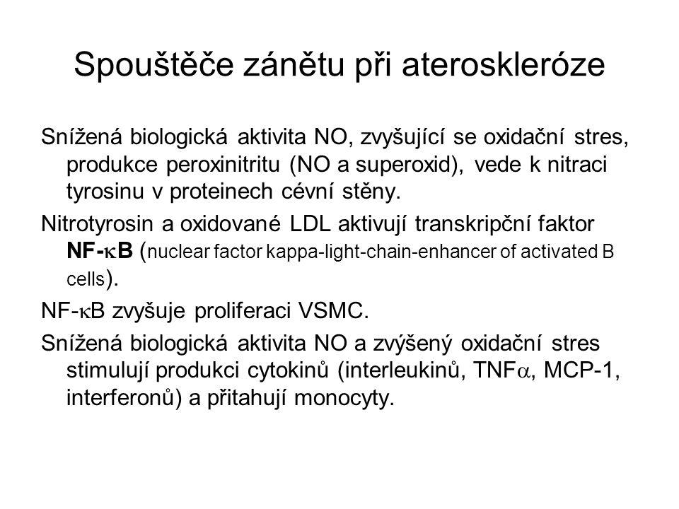 Spouštěče zánětu při ateroskleróze Snížená biologická aktivita NO, zvyšující se oxidační stres, produkce peroxinitritu (NO a superoxid), vede k nitrac