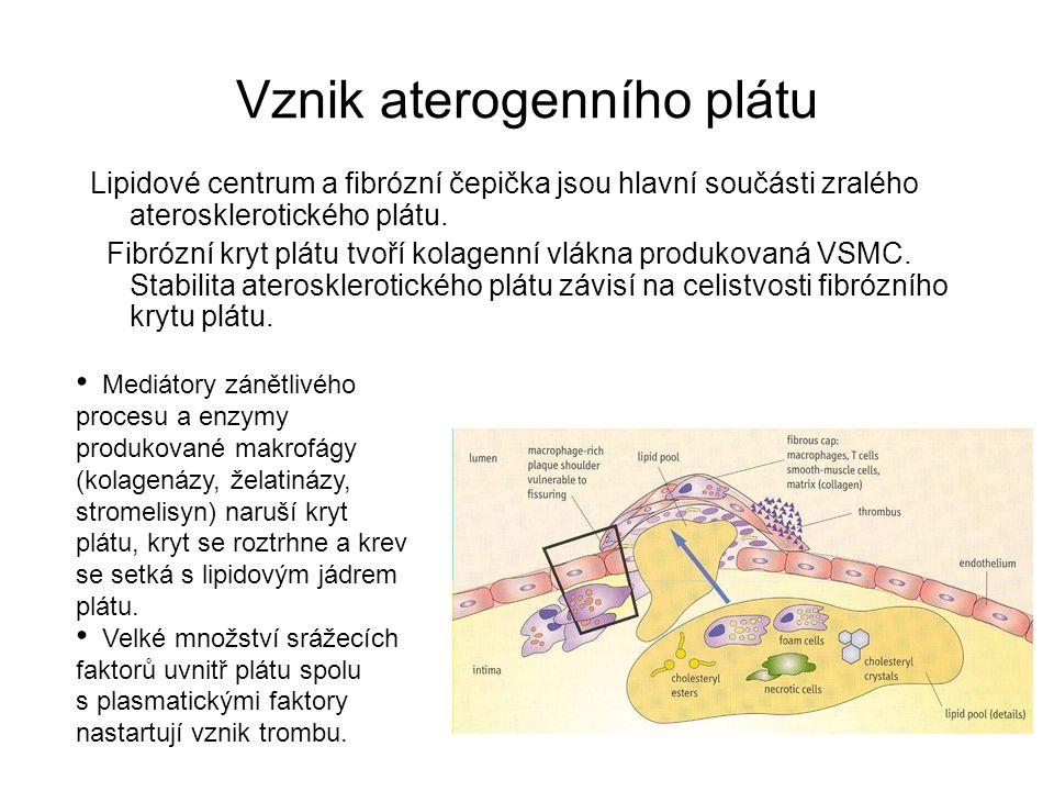 Vznik aterogenního plátu Lipidové centrum a fibrózní čepička jsou hlavní součásti zralého aterosklerotického plátu. Fibrózní kryt plátu tvoří kolagenn