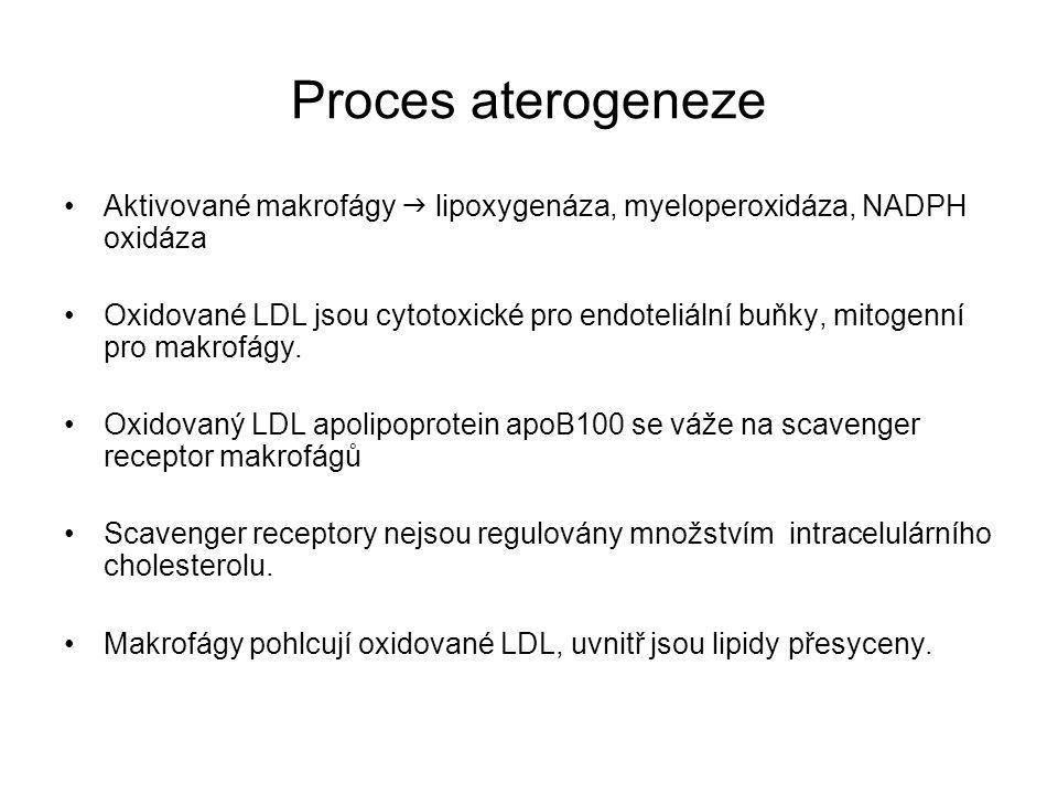 Proces aterogeneze Aktivované makrofágy  lipoxygenáza, myeloperoxidáza, NADPH oxidáza Oxidované LDL jsou cytotoxické pro endoteliální buňky, mitogenn