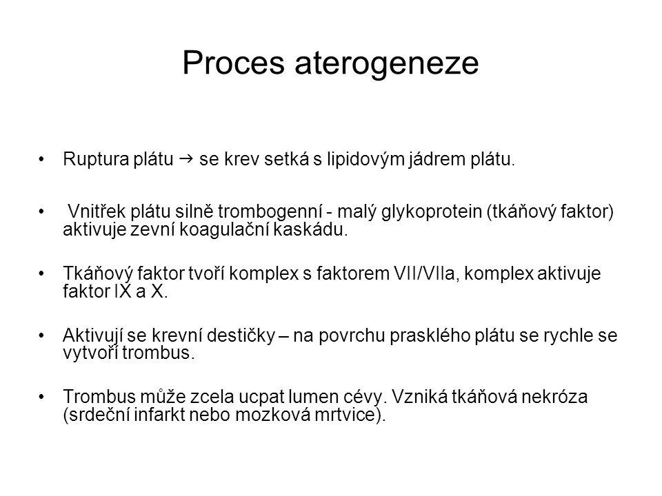 Proces aterogeneze Ruptura plátu  se krev setká s lipidovým jádrem plátu. Vnitřek plátu silně trombogenní - malý glykoprotein (tkáňový faktor) aktivu