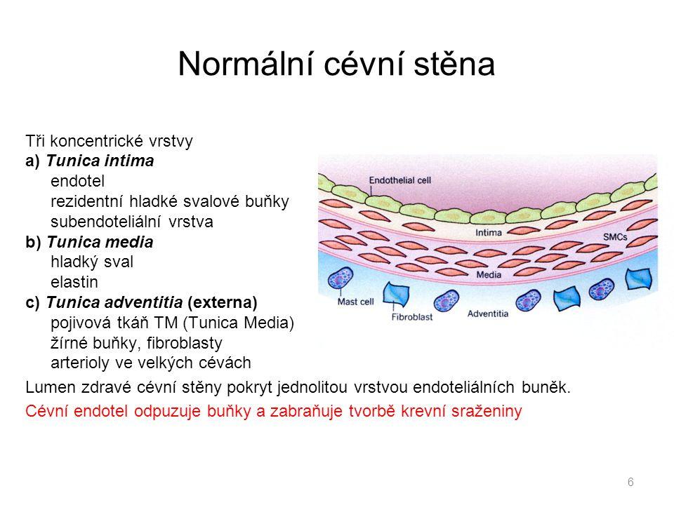 Normální cévní stěna Tři koncentrické vrstvy a) Tunica intima endotel rezidentní hladké svalové buňky subendoteliální vrstva b) Tunica media hladký sv