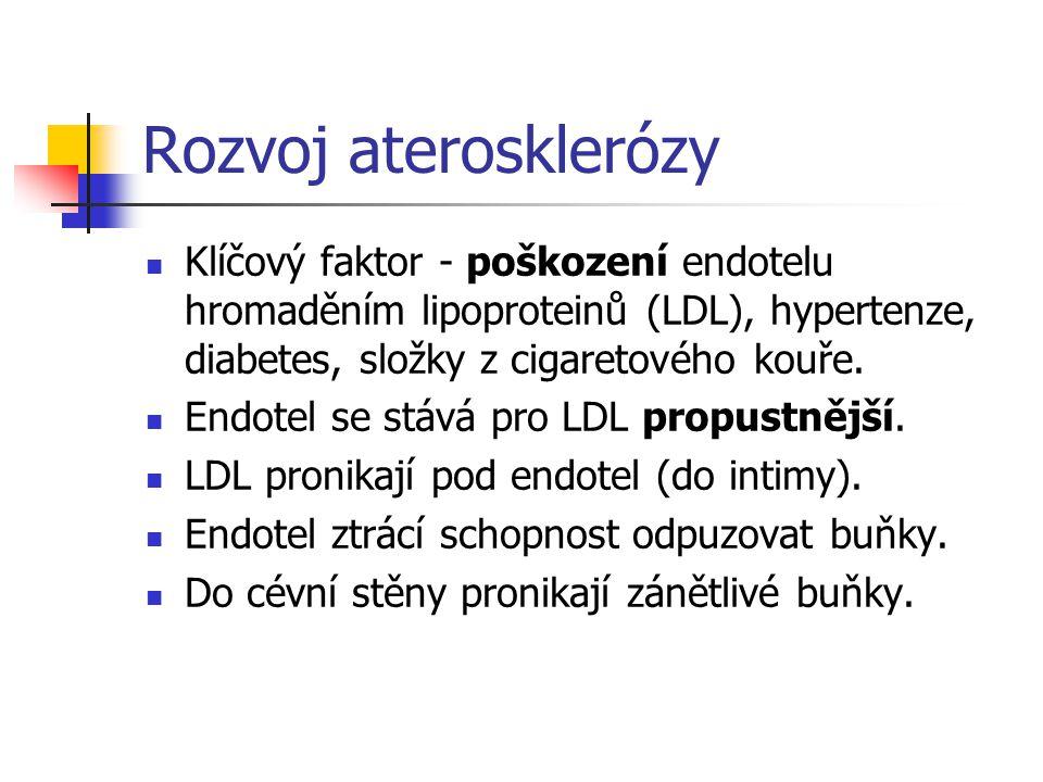 Rozvoj aterosklerózy Klíčový faktor - poškození endotelu hromaděním lipoproteinů (LDL), hypertenze, diabetes, složky z cigaretového kouře. Endotel se