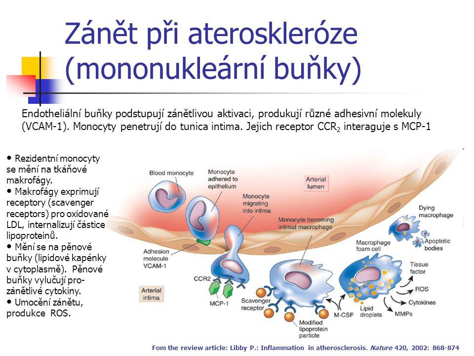 Zánět při ateroskleróze (mononukleární buňky) Fom the review article: Libby P.: Inflammation in atherosclerosis. Nature 420, 2002: 868-874 Endotheliál