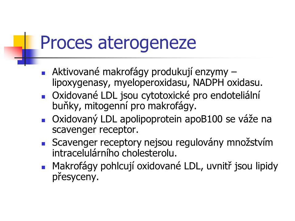 Proces aterogeneze Aktivované makrofágy produkují enzymy – lipoxygenasy, myeloperoxidasu, NADPH oxidasu. Oxidované LDL jsou cytotoxické pro endoteliál