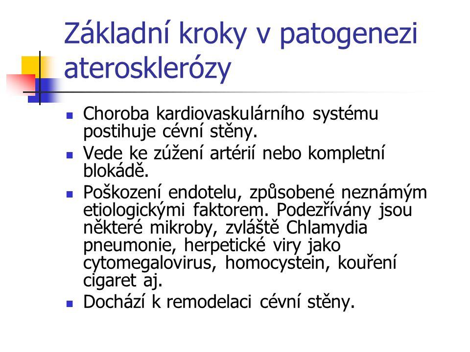 Základní kroky v patogenezi aterosklerózy Intenzivní vzájemná komunikce mezi endoteliálními buňkami (EC), hladkými svalovými buňkami (VSMC), plasmatickými zánětlivými buňkami, lymphocyty (včetně souboru chemokinů, cytokinů, růstových faktorů).