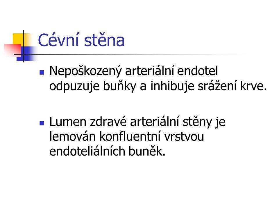 Cévní stěna Cévní stěna má tři vrstvy: 1.Intima (subendoteliální vrstva) 2.