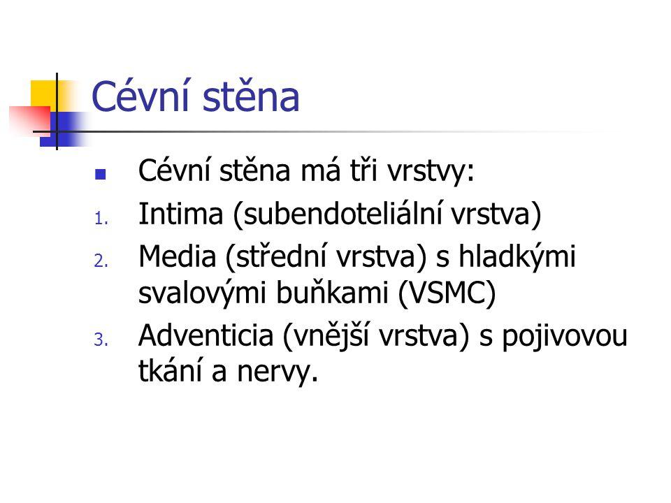 Cévní stěna Cévní stěna má tři vrstvy: 1. Intima (subendoteliální vrstva) 2. Media (střední vrstva) s hladkými svalovými buňkami (VSMC) 3. Adventicia