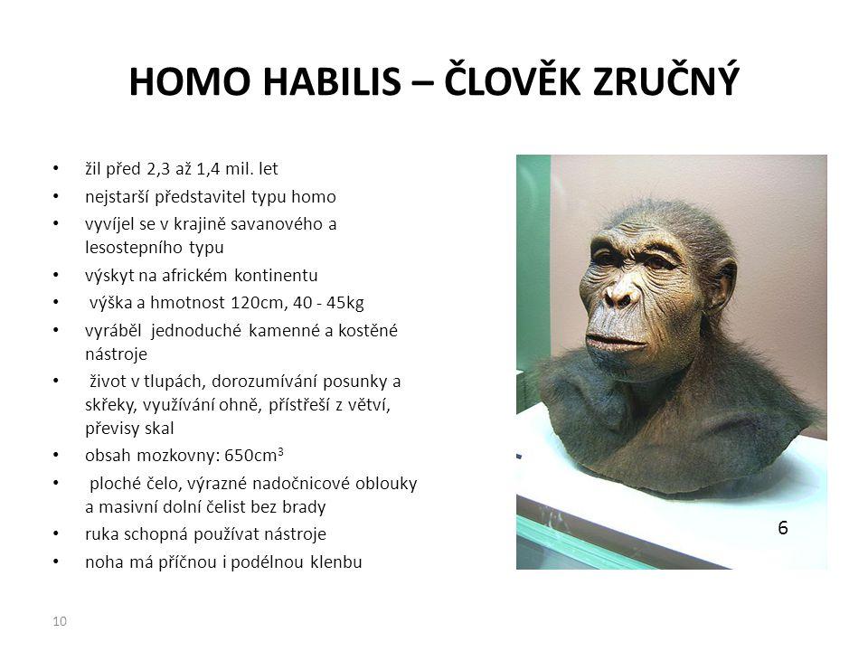 HOMO HABILIS – ČLOVĚK ZRUČNÝ žil před 2,3 až 1,4 mil. let nejstarší představitel typu homo vyvíjel se v krajině savanového a lesostepního typu výskyt