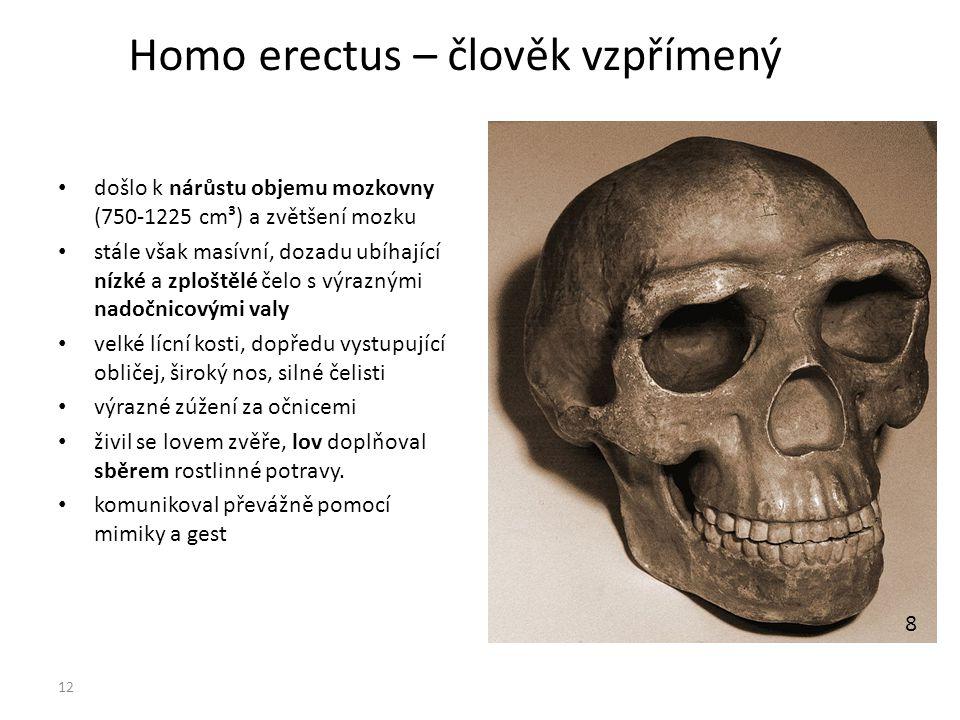 Homo erectus – člověk vzpřímený došlo k nárůstu objemu mozkovny (750-1225 cm³) a zvětšení mozku stále však masívní, dozadu ubíhající nízké a zploštělé