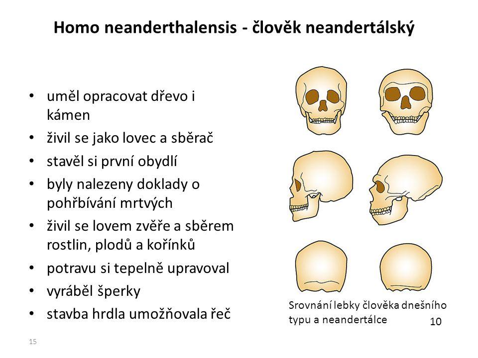 Homo neanderthalensis - člověk neandertálský uměl opracovat dřevo i kámen živil se jako lovec a sběrač stavěl si první obydlí byly nalezeny doklady o