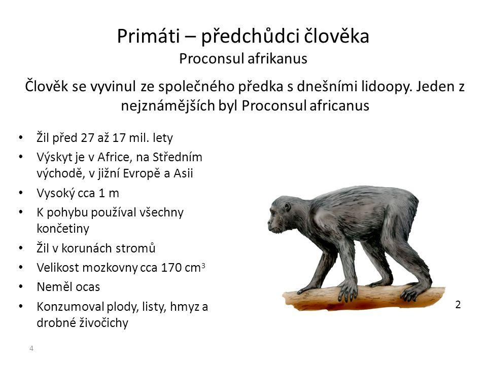 2 Primáti – předchůdci člověka Proconsul afrikanus Žil před 27 až 17 mil. lety Výskyt je v Africe, na Středním východě, v jižní Evropě a Asii Vysoký c