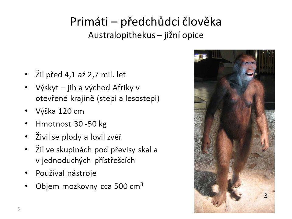 Primáti – předchůdci člověka Australopithekus – jižní opice Žil před 4,1 až 2,7 mil. let Výskyt – jih a východ Afriky v otevřené krajině (stepi a leso