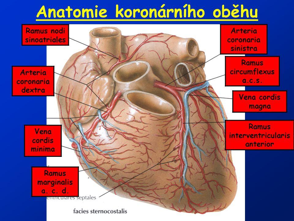 Anatomie koronárního oběhu Ramus interventricularis anterior Arteria coronaria sinistra Ramus circumflexus a.c.s. Vena cordis magna Ramus nodi sinoatr