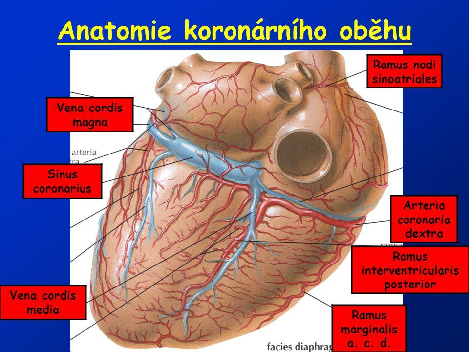Anatomie koronárního oběhu Arteria coronaria dextra Vena cordis magna Vena cordis media Sinus coronarius Ramus interventricularis posterior Ramus marg