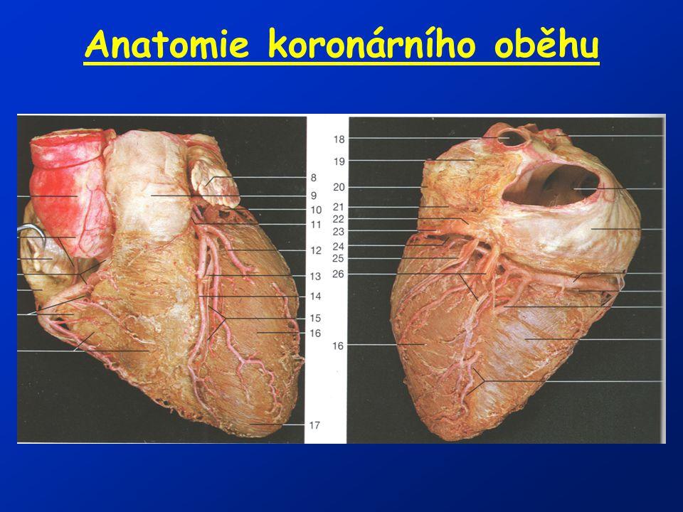 Anatomie koronárního oběhu