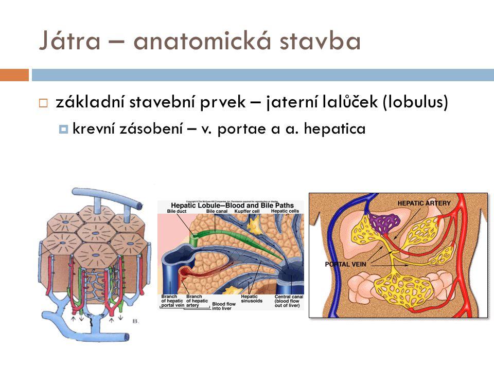 Játra – anatomická stavba  základní stavební prvek – jaterní lalůček (lobulus)  krevní zásobení – v. portae a a. hepatica
