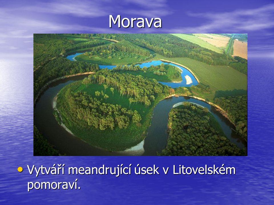Morava Vytváří meandrující úsek v Litovelském pomoraví.
