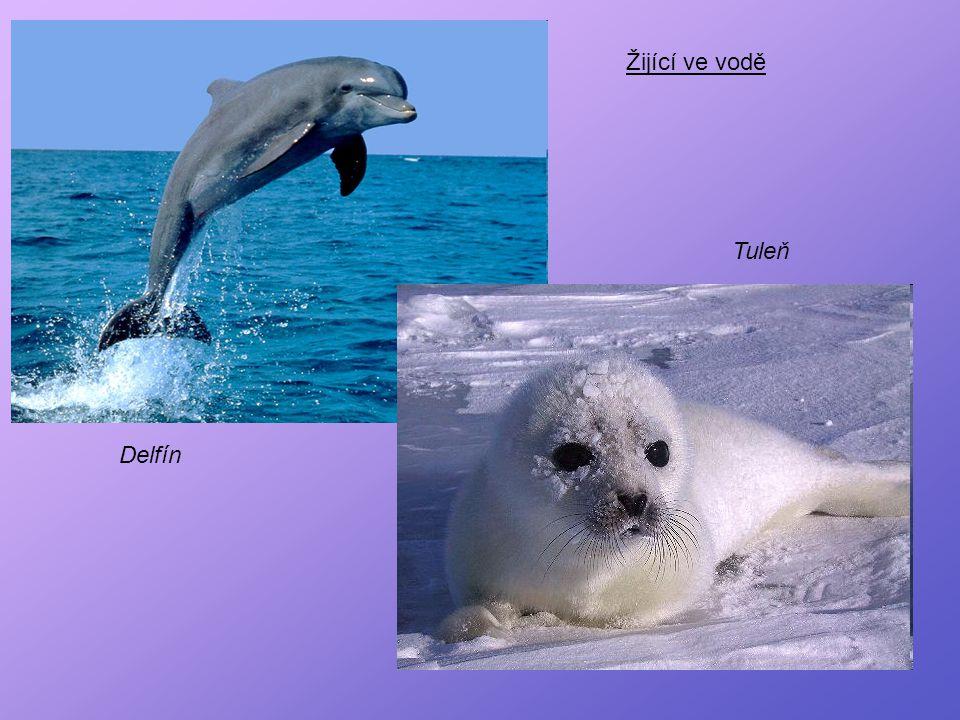 Tuleň Delfín Žijící ve vodě