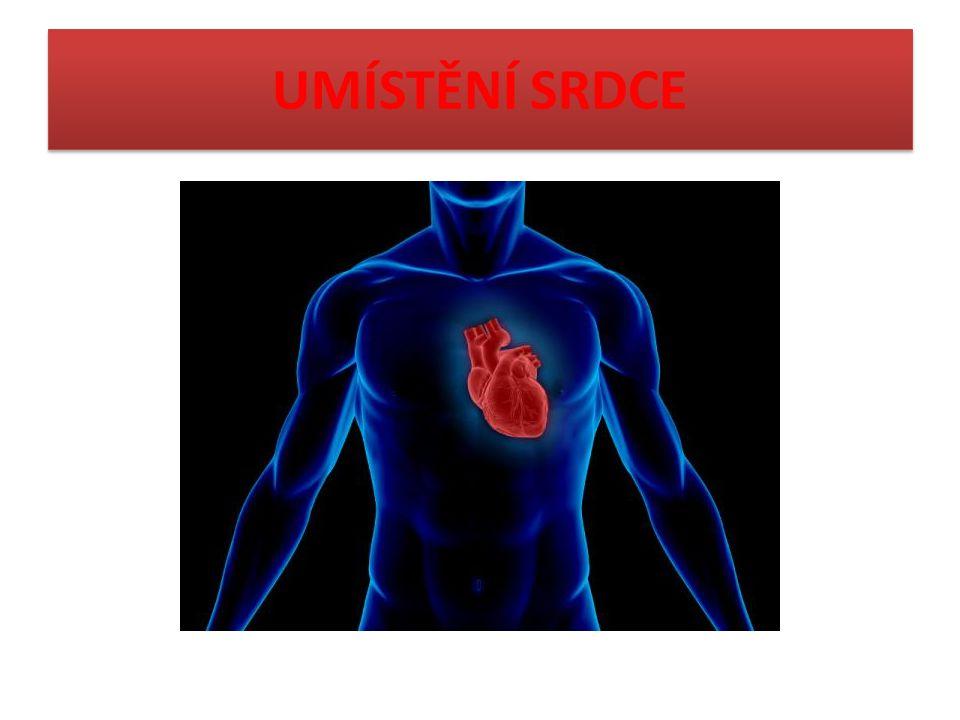 SRDCE Srdce funguje jako pumpa.Pravidelnými stahy (cca 60 za minutu) přečerpává krev v cévách.