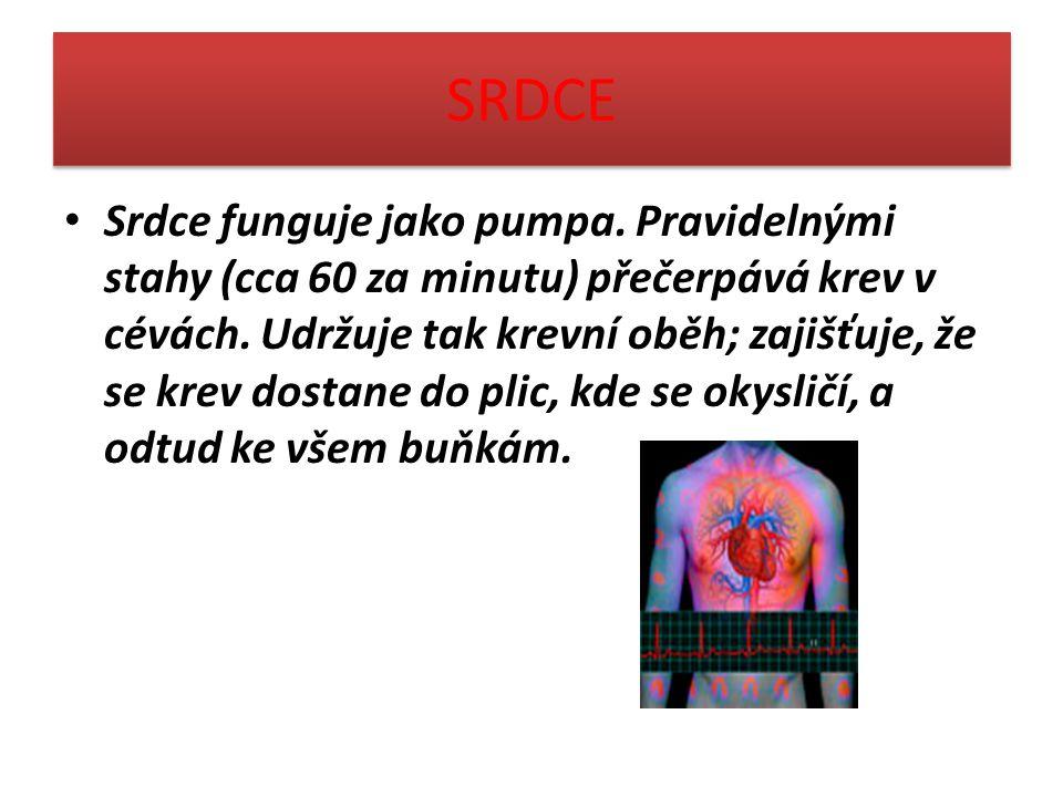 SRDCE Srdce funguje jako pumpa. Pravidelnými stahy (cca 60 za minutu) přečerpává krev v cévách. Udržuje tak krevní oběh; zajišťuje, že se krev dostane