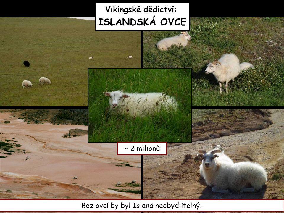 Vikingské dědictví: ISLANDSKÁ OVCE Bez ovcí by byl Island neobydlitelný. ~ 2 milionů
