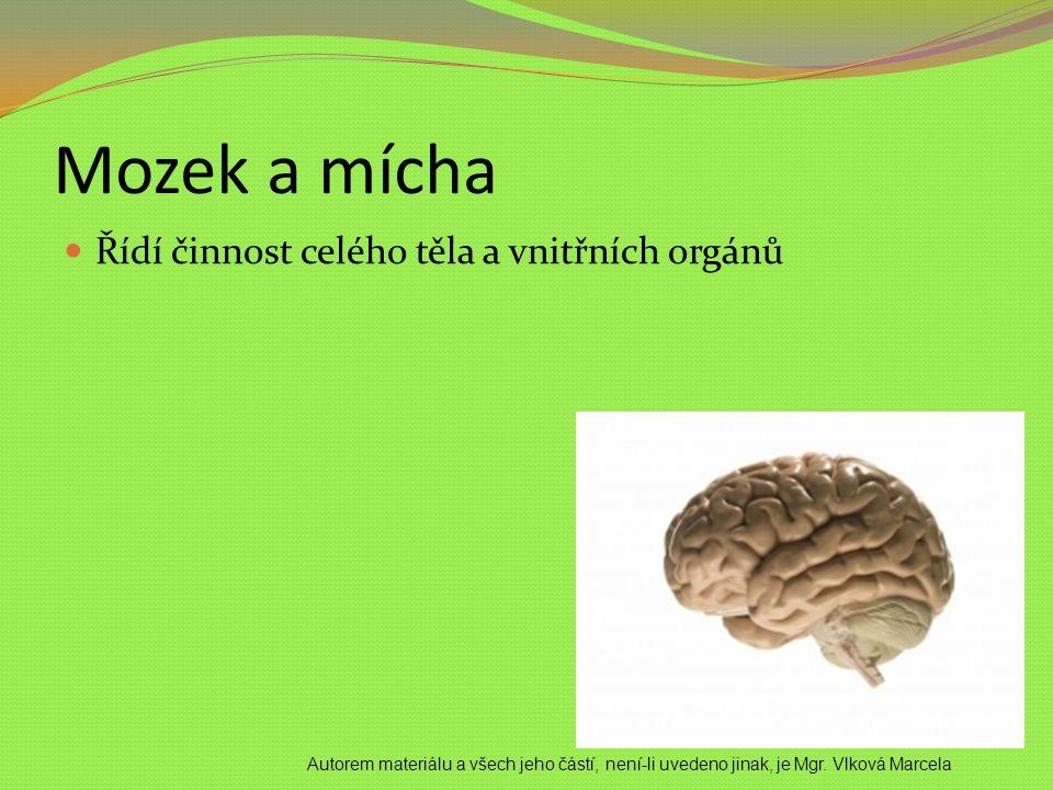 Mozek a mícha Řídí činnost celého těla a vnitřních orgánů Autorem materiálu a všech jeho částí, není-li uvedeno jinak, je Mgr. Vlková Marcela