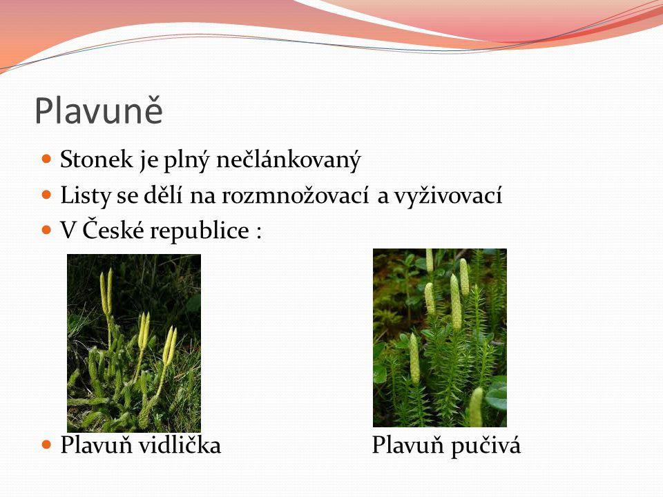 Plavuně Stonek je plný nečlánkovaný Listy se dělí na rozmnožovací a vyživovací V České republice : Plavuň vidličkaPlavuň pučivá