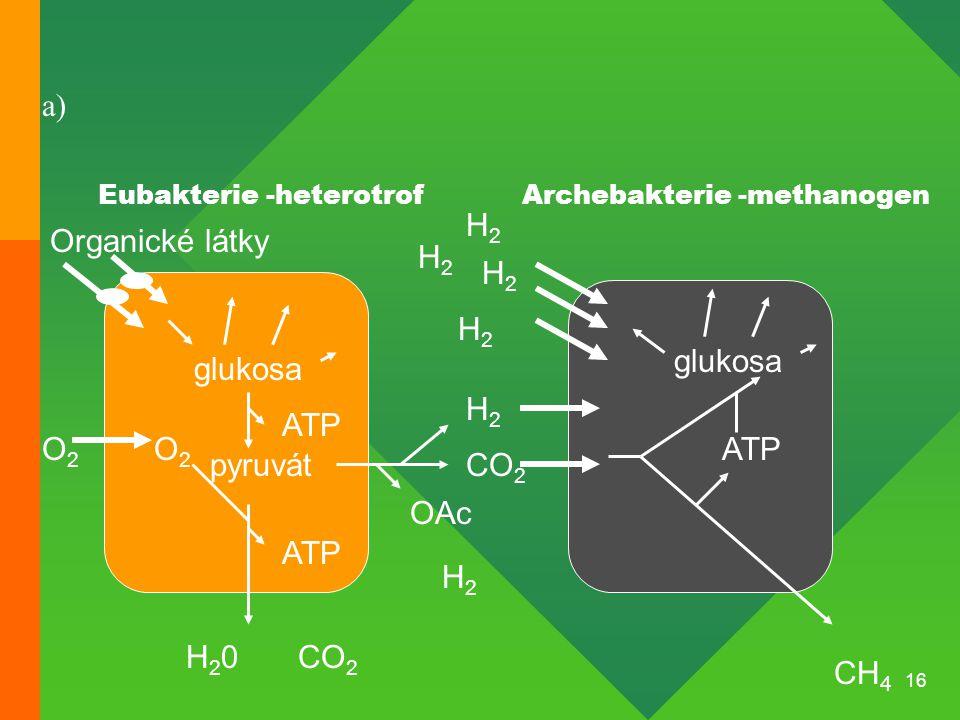 16 Organické látky glukosa pyruvát O2O2 O2O2 ATP CH 4 CO 2 ATP H2H2 H2H2 H2H2 H2H2 H2H2 OAc H2H2 CO 2 glukosa ATP H20H20 Eubakterie -heterotrofArcheba