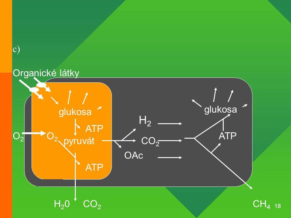 18 Organické látky glukosa pyruvát O2O2 O2O2 ATP CH 4 CO 2 ATP H2H2 CO 2 glukosa ATP H20H20 OAc c)