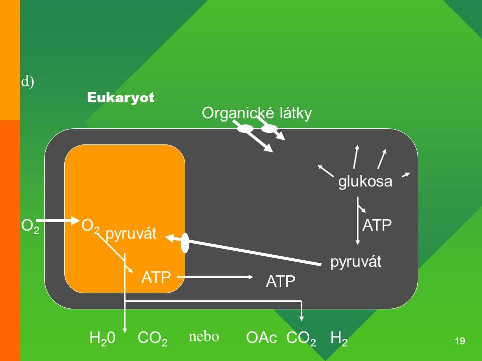 19 Organické látky pyruvát O2O2 O2O2 H2H2 CO 2 ATP CO 2 glukosa ATP H20H20 Eukaryot OAc pyruvát nebo ATP d)