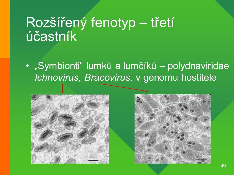 """36 Rozšířený fenotyp – třetí účastník """"Symbionti"""" lumků a lumčíků – polydnaviridae Ichnovirus, Bracovirus, v genomu hostitele"""