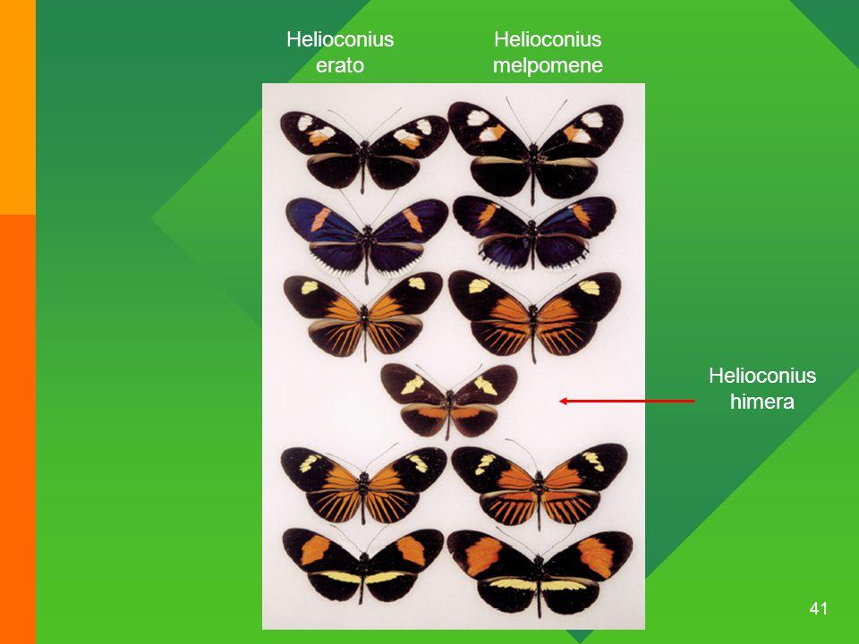 41 Helioconius erato Helioconius melpomene Helioconius himera