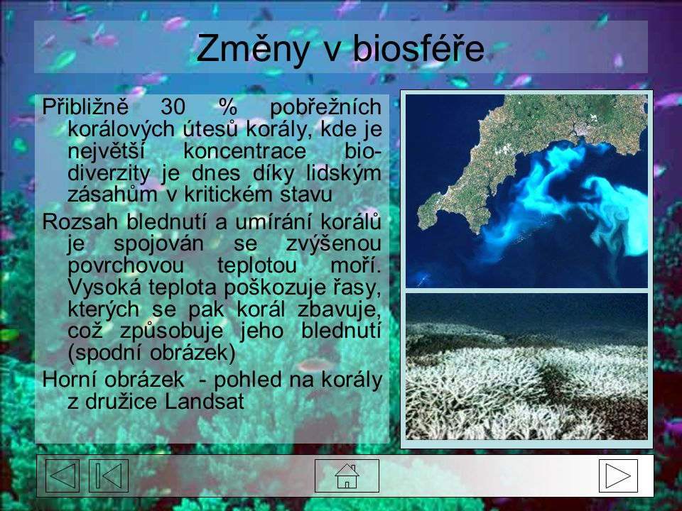 Změny v biosféře Přibližně 30 % pobřežních korálových útesů korály, kde je největší koncentrace bio- diverzity je dnes díky lidským zásahům v kritickém stavu Rozsah blednutí a umírání korálů je spojován se zvýšenou povrchovou teplotou moří.