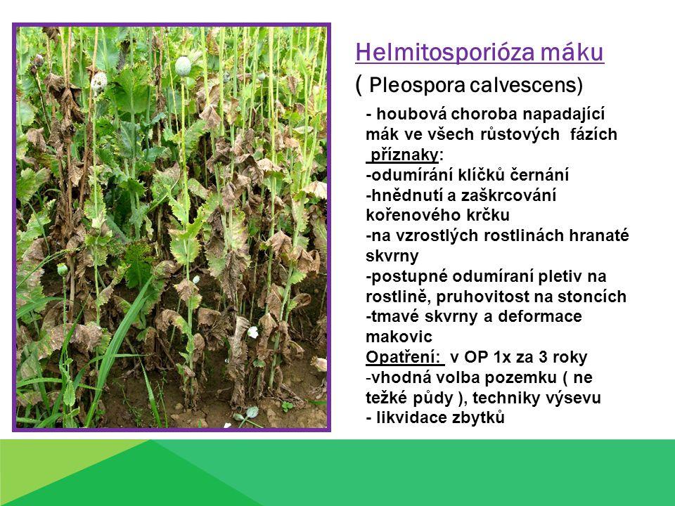 Helmitosporióza máku ( Pleospora calvescens) - houbová choroba napadající mák ve všech růstových fázích příznaky: -odumírání klíčků černání -hnědnutí