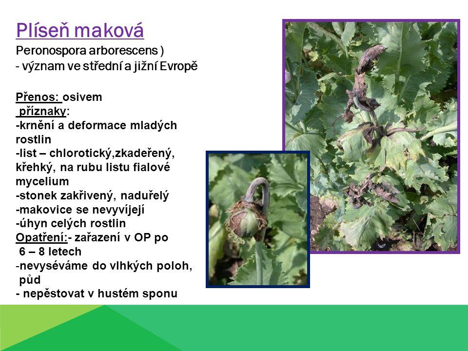 Plíseň maková Peronospora arborescens ) - význam ve střední a jižní Evropě Přenos: osivem příznaky: -krnění a deformace mladých rostlin -list – chloro