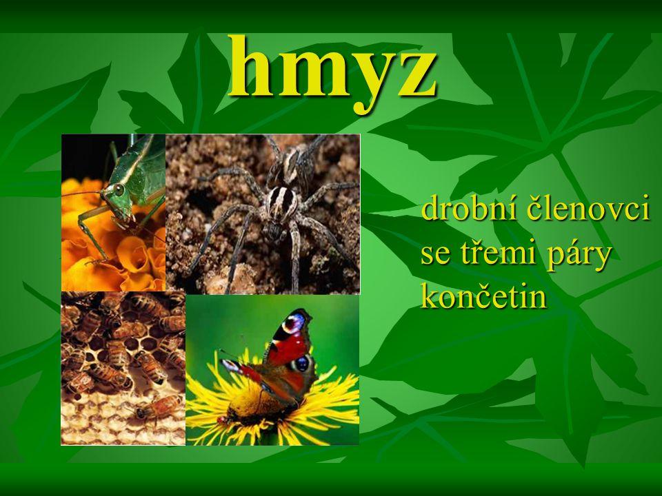 hmyz drobní členovci se třemi páry končetin drobní členovci se třemi páry končetin
