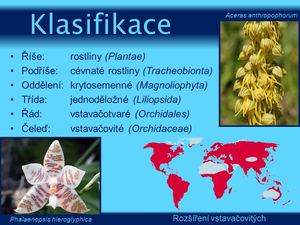 Říše:rostliny (Plantae) Podříše:cévnaté rostliny (Tracheobionta) Oddělení:krytosemenné (Magnoliophyta) Třída:jednoděložné (Liliopsida) Řád:vstavačotva
