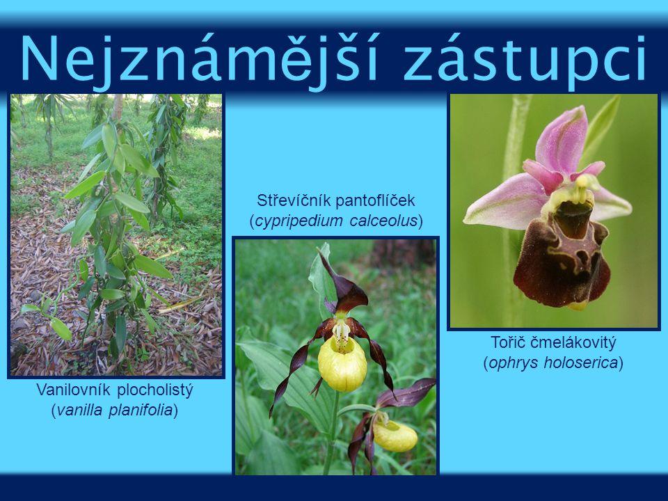 Vanilovník plocholistý (vanilla planifolia) Tořič čmelákovitý (ophrys holoserica) Střevíčník pantoflíček (cypripedium calceolus) Nejznám ě jší zástupc