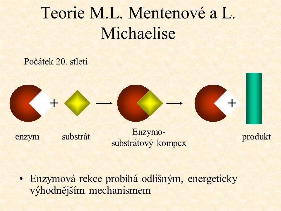 Teorie M.L. Mentenové a L. Michaelise Enzymová rekce probíhá odlišným, energeticky výhodnějším mechanismem Počátek 20. stletí + enzym substrát Enzymo-