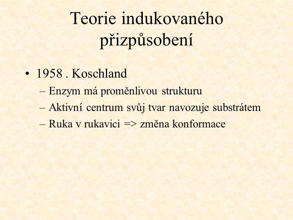 Teorie indukovaného přizpůsobení 1958. Koschland –Enzym má proměnlivou strukturu –Aktivní centrum svůj tvar navozuje substrátem –Ruka v rukavici => zm