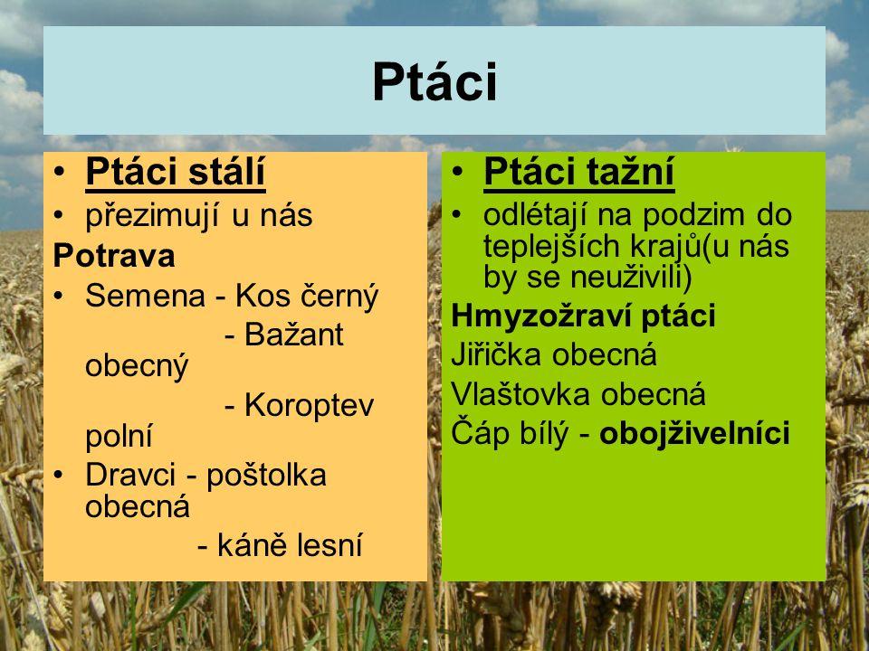 Téma: Živočichové na polích – ptáci, 4.ročník Použitý software: držitel licence - ZŠ J.