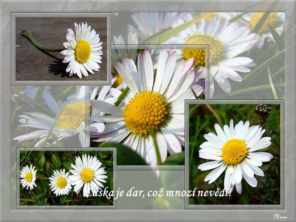 Maria Život je zahrada plná květin radosti, spokojenosti a šťastných příležitostí. Využijte toho!