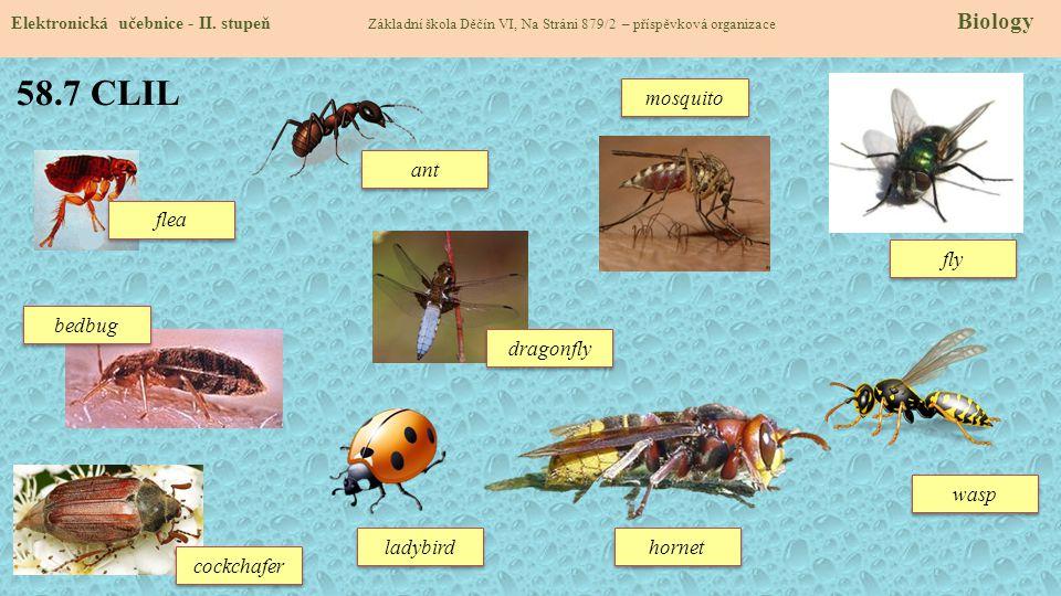 58.7 CLIL Elektronická učebnice - II. stupeň Základní škola Děčín VI, Na Stráni 879/2 – příspěvková organizace Biology cockchafer bedbug fly ant mosqu