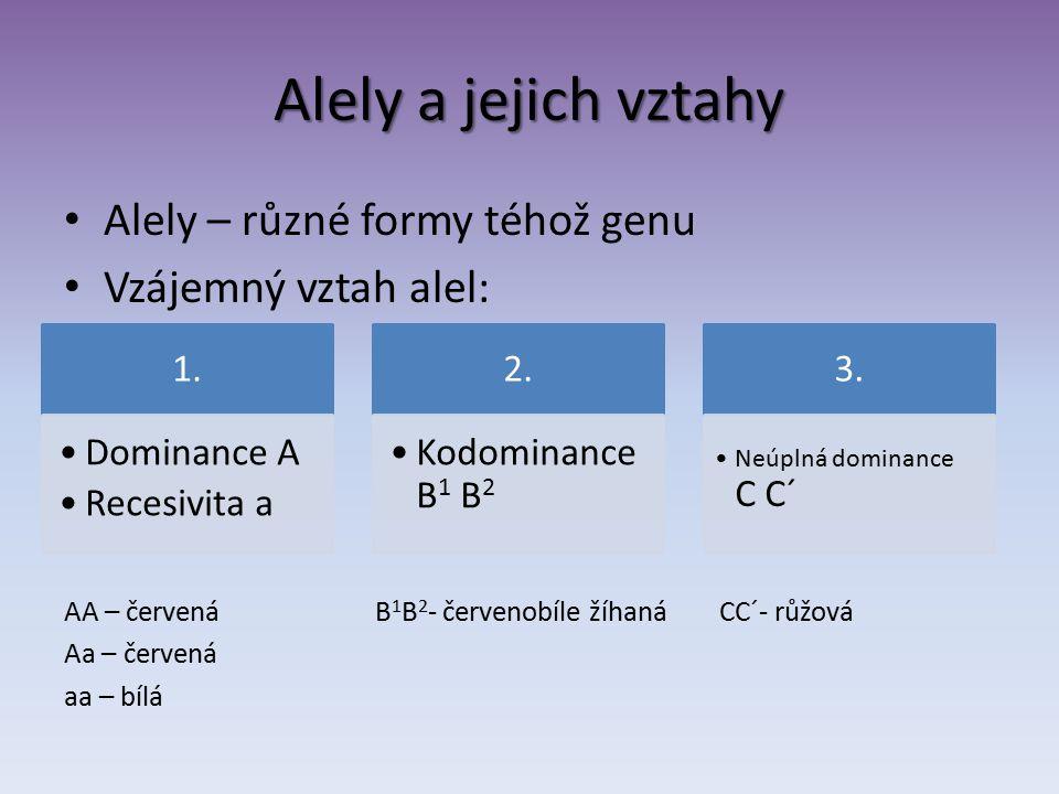 Alely a jejich vztahy Alely – různé formy téhož genu Vzájemný vztah alel: AA – červená B 1 B 2 - červenobíle žíhaná CC´- růžová Aa – červená aa – bílá 1.
