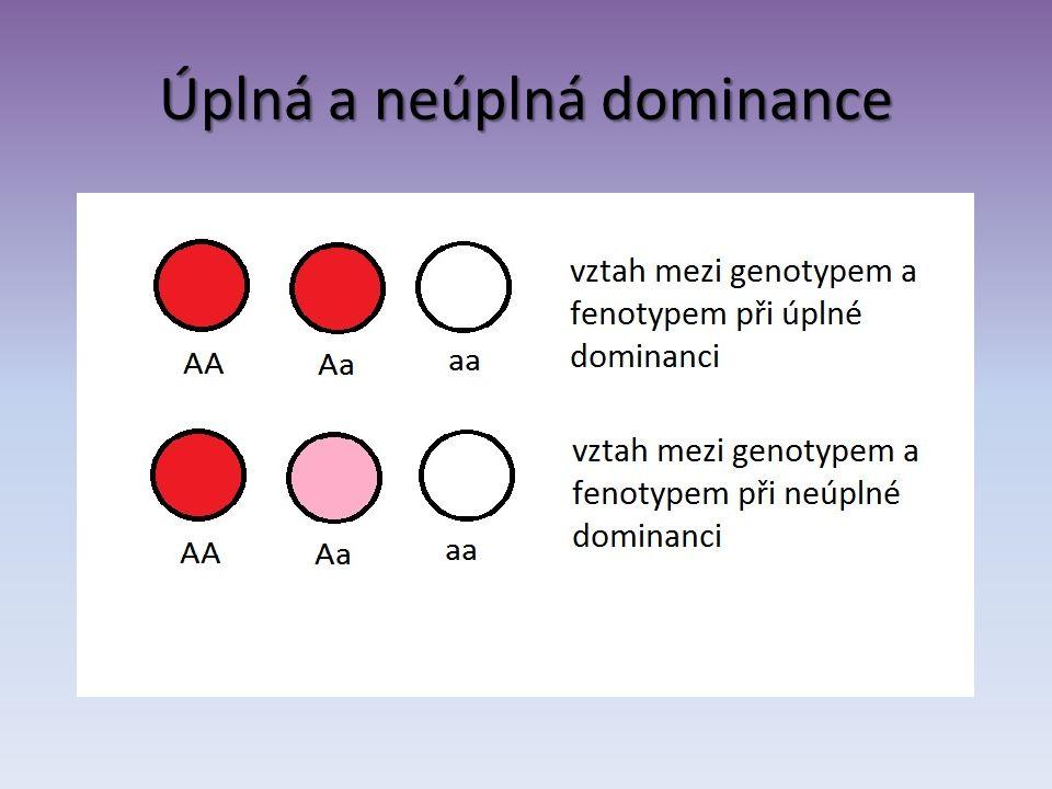 Typy genotypů Dominantní homozygot – nositel dvou dominantních alel AA Recesivní homozygot – nositel dvou recesivních alel aa Heterozygot – nositel dvou funkčně rozdílných alel (např.